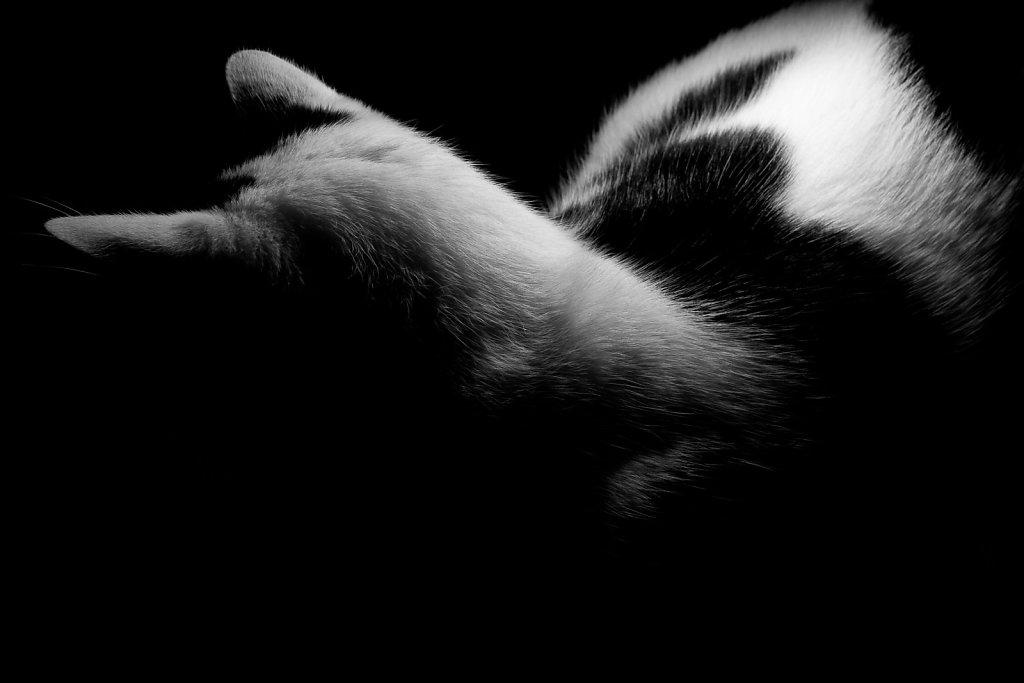 Stefan-Zauner-Life-031.jpg