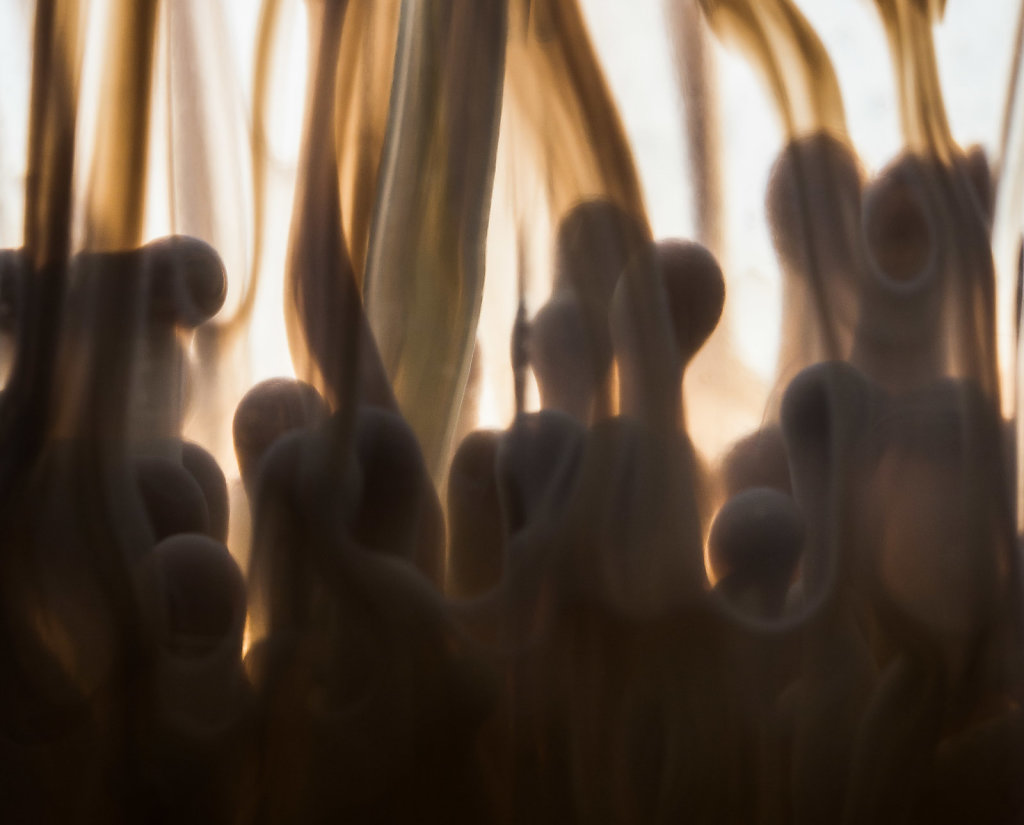 Stefan-Zauner-Life-038.jpg
